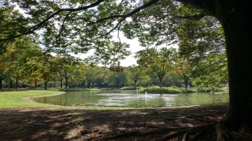 Yoyogi Park fountains